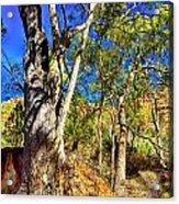 Gum Tree Ridge Acrylic Print