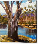 Gum Trees Of The Snowy River Acrylic Print