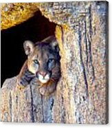 Guardian Of The Cliff Acrylic Print