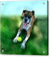 Gus The Rescue Dog Acrylic Print