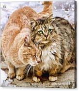 Gutter Kitties Five Acrylic Print