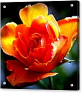Gypsy Rose Acrylic Print