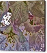 H Cherry Blossom Cont L Acrylic Print