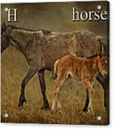 H Is For Horse Acrylic Print