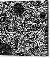 H2 Sunflowers Map Bw Acrylic Print
