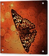 Hackberry Emperor - Asterocampa Celtis Acrylic Print