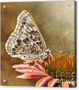 Hackberry Emperor Butterfly 2 Acrylic Print