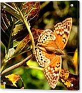 Hackberry Emperor Butterfly Acrylic Print