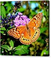 Hackberry Emperor Butterfly On Flowers Acrylic Print