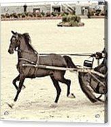 Hackney Pony Cart Acrylic Print