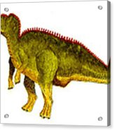 Hadrosaurus Acrylic Print