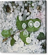 Hailstones And Leaves Acrylic Print