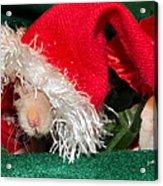Hairless Christmas Acrylic Print