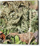 Hairy Moss Fairy Acrylic Print