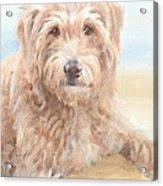 Hairy Sheepdog Watercolor Portrait Acrylic Print
