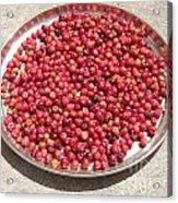 Haitian Cherries Acrylic Print