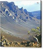 Haleakala Volcano And Chukar Maui Hawaii Acrylic Print