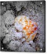 Half Buried Shell Acrylic Print