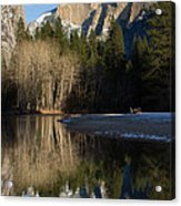 Half Dome And Cottonwoods Reflected In Merced River  Acrylic Print