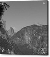 Half Dome In Distance Black And White Acrylic Print