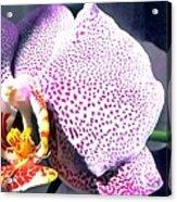 Half Orchid Acrylic Print
