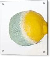 Half Rotten Lemon Acrylic Print by Sami Sarkis