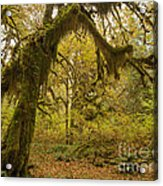 Hall Of Mosses 5 Acrylic Print