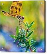 Halloween Banner Dragonfly 0762 Acrylic Print