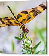 Halloween Banner Dragonfly Acrylic Print