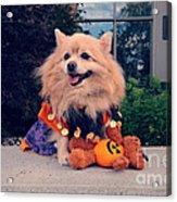 Halloween Dog Acrylic Print