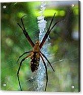 Halloween Spider Acrylic Print by Annette Allman