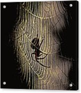 Halloween - Spider Acrylic Print