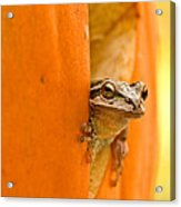 Halloween Surprise  Acrylic Print by Jean Noren