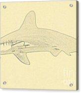 Hammerhead Shark Illustration Acrylic Print