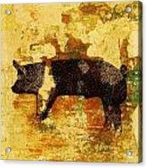 Swedish Hampshire Boar 4 Acrylic Print