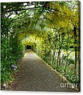 Hampton Court Palace Flower Tunnel Acrylic Print