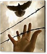 Hand Reaching Out For Bird Acrylic Print