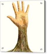 Hand Tree Acrylic Print