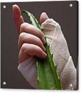 Hand With Bandage Holding Aloe Vera Leaf Acrylic Print