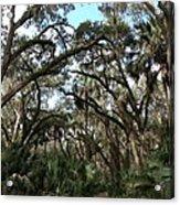 Hang Moss Tree Trail Acrylic Print