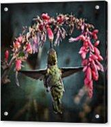 Hang Time  Acrylic Print