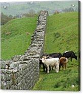 Hangin Out At Hadrians Wall England Scotland Acrylic Print