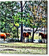 Hanging By The Pond Acrylic Print