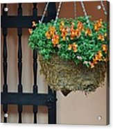 Hanging Flowers And Black Gate Acrylic Print