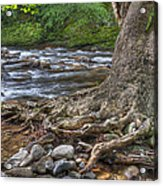 Hanging In There Acrylic Print by Wendell Thompson