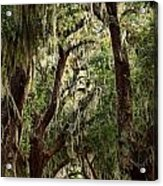 Hanging Moss And Giant Oaks Acrylic Print