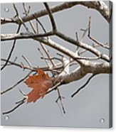 Hanging On Acrylic Print by Margaret McDermott