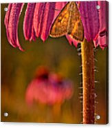 Hanging Out To Dry Acrylic Print