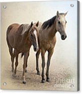 Hanging Out Together Acrylic Print by Betty LaRue