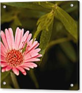 Hanging Out With A Flower Acrylic Print